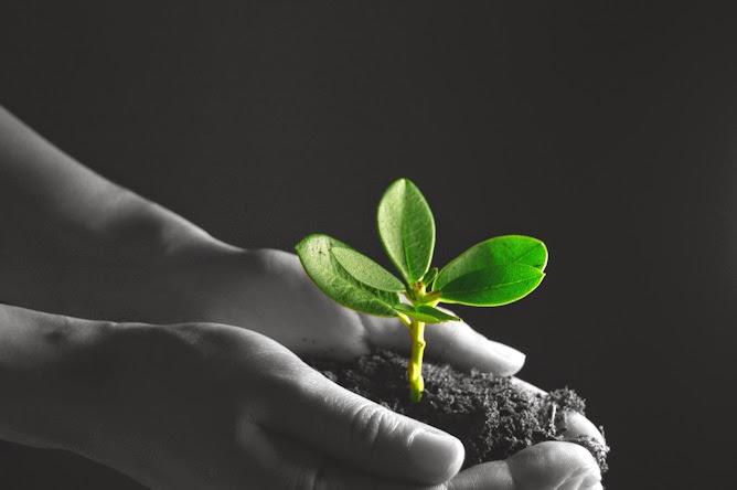 How We Help You Grow